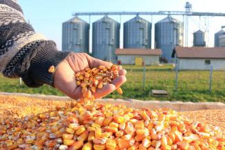 Правительство России расширит поддержку экспорта сельхозпродукции