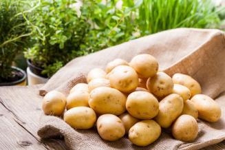 Новгородская область — лидер СЗФО по урожаю картофеля