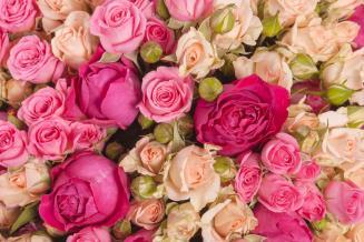 В Мордовии открыт новый тепличный комплекс по выращиванию роз