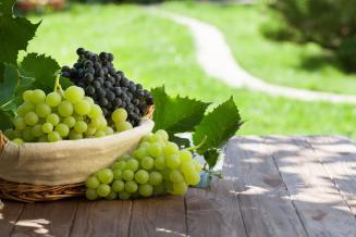 К1 октября вРоссии собрано 345 тыс. т винограда