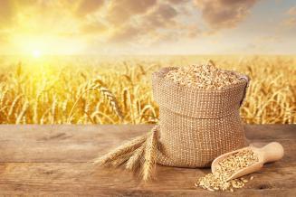 В Липецкой области продолжается уборка зерновых и зернобобовых культур