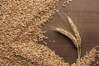 Россия готова принимать участие в тендерах Алжира на поставку пшеницы