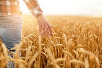 Зерновые и зернобобовые культуры во Владимирской области обмолочены на 95% площади