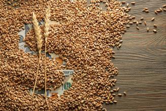Квота на экспорт зерна из РФ может быть установлена с 1 января по 30 июня 2021 года