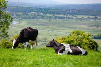 В Госдуму внесен законопроект о продлении льготы по НДС на импорт и продажу племенного скота до конца 2025 года