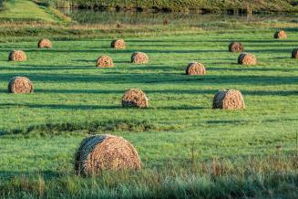 К 7 октября в Смоленской области скошено 95,5 тыс. га трав