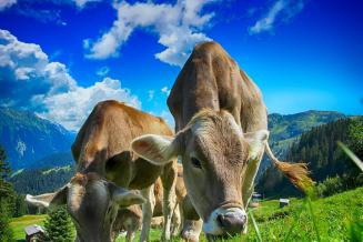 В Забайкалье застраховали более 66 тыс. сельхозживотных и почти 100 тыс. га посевов
