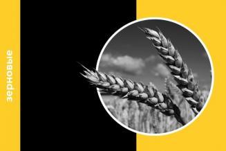 Ежемесячный обзор рынка зерновых за октябрь