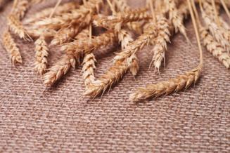 Минсельхоз США повысил прогнозы по урожаю и экспорту пшеницы из России на 0,5 млн т