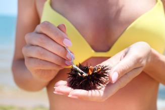 На Сахалине начали культивировать морского ежа и морскую капусту