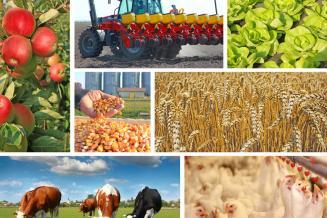 Волгоградские аграрии получили из федерального бюджета 2,5 млрд руб. господдержки