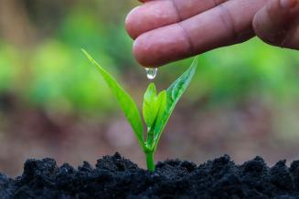 В томском вузе разработали экологичный гидрогель для удержания влаги в почве