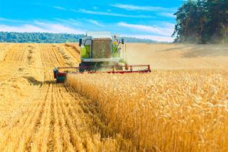 В Нижегородской области собрали рекордный урожай зерновых культур