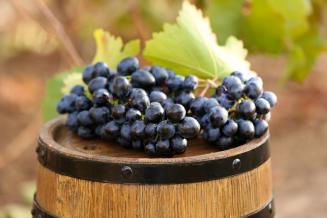 Производство вина в России в 2020 году вырастет на 3-5%
