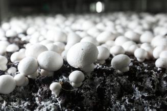 Правительство России внесло грибы в перечень сельскохозяйственной продукции