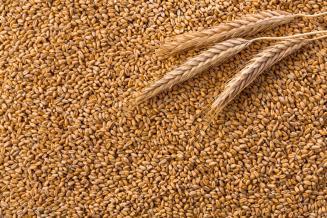 МСЗ повысил прогноз экспорта пшеницы из РФ в этом сельхозгоду