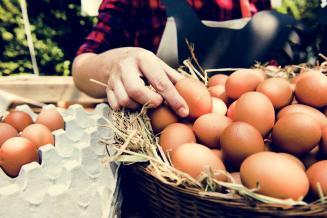 В Красноярском крае цены производителей на яйца самые низкие в СФО