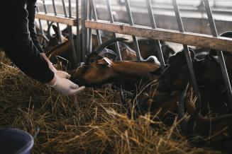 В Ярославской области растет доля рогатого скота, содержащегося в КФХ