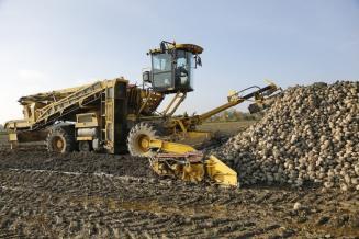 В Белгородской области сахарная свекла убрана на 89,2% площади