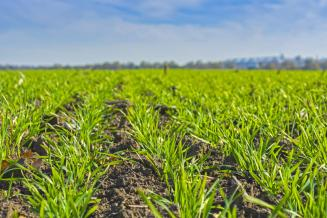 Состояние 78% посевов озимых зерновых в РФ оценивается как хорошее иудовлетворительное