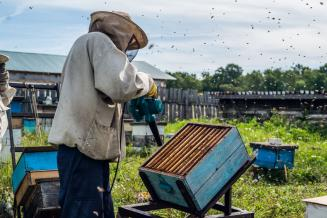 60% пчелосемей зарегистрированы в реестре, созданном Минсельхозом