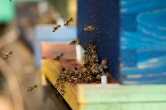 Законопроект о пчеловодстве принят во втором чтении