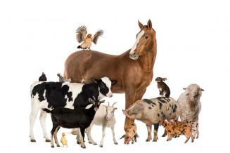 В Свердловской области растут показатели в молочном и мясном животноводстве