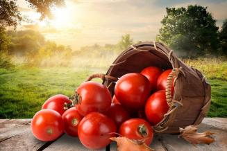 Россия запретила ввоз яблок и томатов из Азербайджана