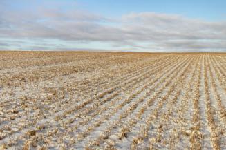 Оренбургские аграрии впервые в мире провели беспилотную уборку кукурузы с заснеженного поля