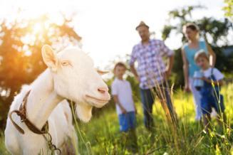 Бюджет Курганской области просубсидирует до 70% затрат на покупку скота для ЛПХ