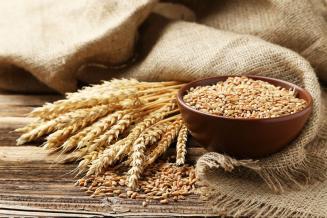 В Волгоградской области урожай зерна превысил прошлогодний на 14,1%