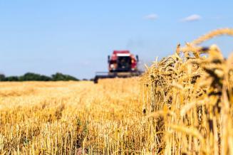 В Калининградской области урожай зерна на 9% превысил прошлогодний