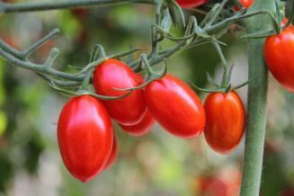 Дмитрий Авельцов: в течение 5–6 лет РФ сможет закрыть свои потребности в тепличных овощах