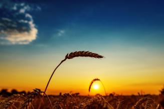 ФАО снизила прогноз производства зерновых в мире в 2020 году