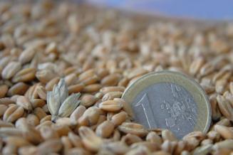С 15 февраля по 30 июня 2021 года в России будет введена экспортная пошлина на пшеницу— 25 евро за тонну