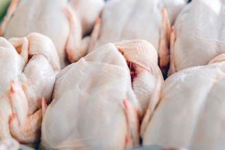 Вологодские сельхозорганизации увеличили выпуск скота и птицы на убой на 11,5%