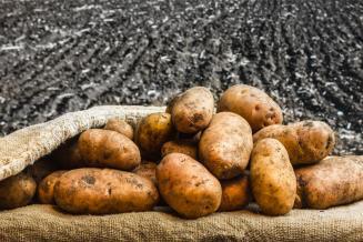Аграрии Коми собрали почти в 1,5 раза больше картофеля по сравнению с прошлым годом