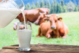 В татарстанских сельхозорганизациях за сутки получено 3,7 тыс. т молока