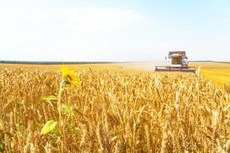 Урожай зерновых в 2020 году составил 133 млн т