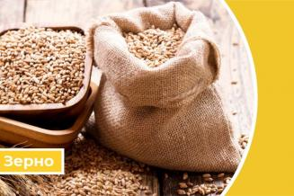 Дайджест «Зерновые»: Россия установила тариф на экспорт зерна и экспортную пошлину на пшеницу