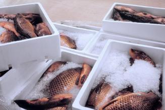 Резиденты ТОР запускают на Дальнем Востоке мощности для хранения свыше 4,7 тыс. т рыбы
