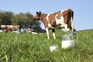 В сельхозорганизациях Владимирской области растут надои молока