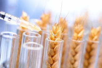 Для защиты от ввоза ГМО поставляемое в Россию зерно предложили стерилизовать