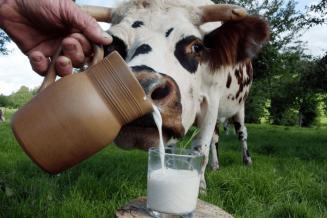 В Башкортостане увеличивается производство молока