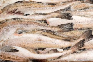 С избытком рыбы предложено бороться госзакупками