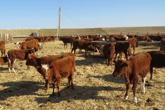Животноводы Калмыкии в 2020 году получили более 1 млрд рублей господдержки