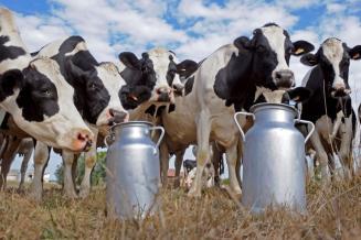 В Оренбургской области в 2020 году открылось шесть молочных ферм