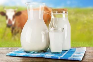 Сельхозорганизации и фермерские хозяйства Курганской области увеличили производство молока