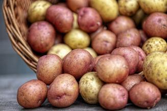 Производители предложили допустить в магазины картофель «экономкласса»