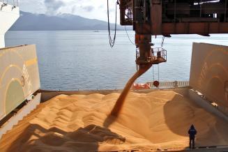 РФ экспортировала почти 4 млн т продовольственной пшеницы из портов АЧБ в декабре